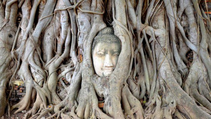 La tête de bouddha dans les racines d'un arbre à Ayatthaya Thailande