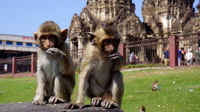 Thailande : Singe devant un temple a Lopburi