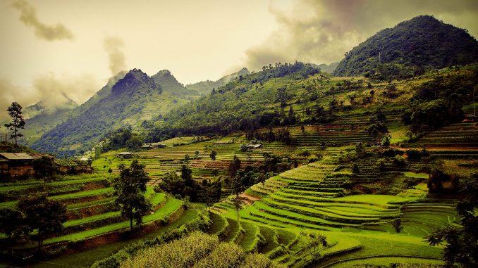 Les rizières en terrasse du Vietnam par Rehahn